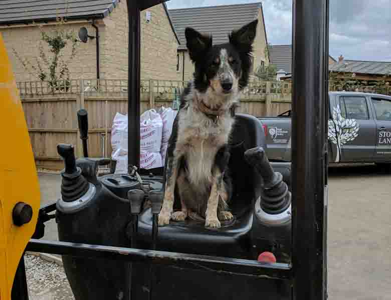 dog driving a digger